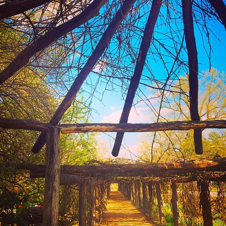 Danica Glass's photo of Stroll Through Coker Arboretum