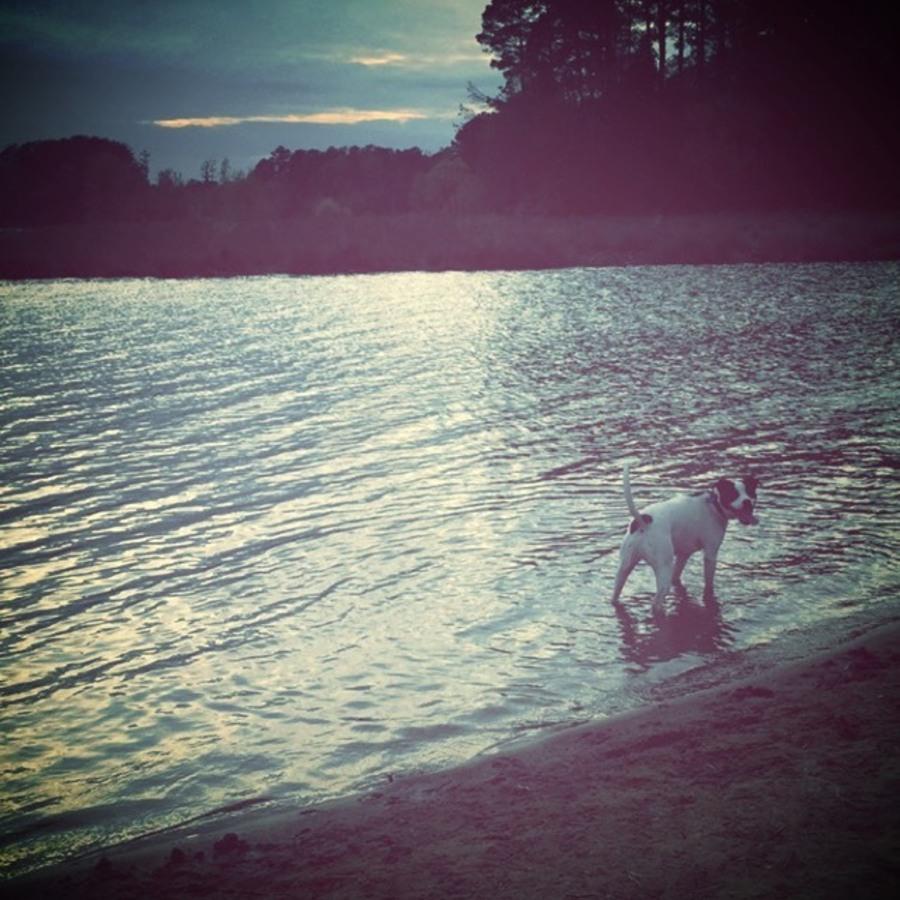 Brittany James's photo of Run Around Lake Crabtree On The Lake Trail