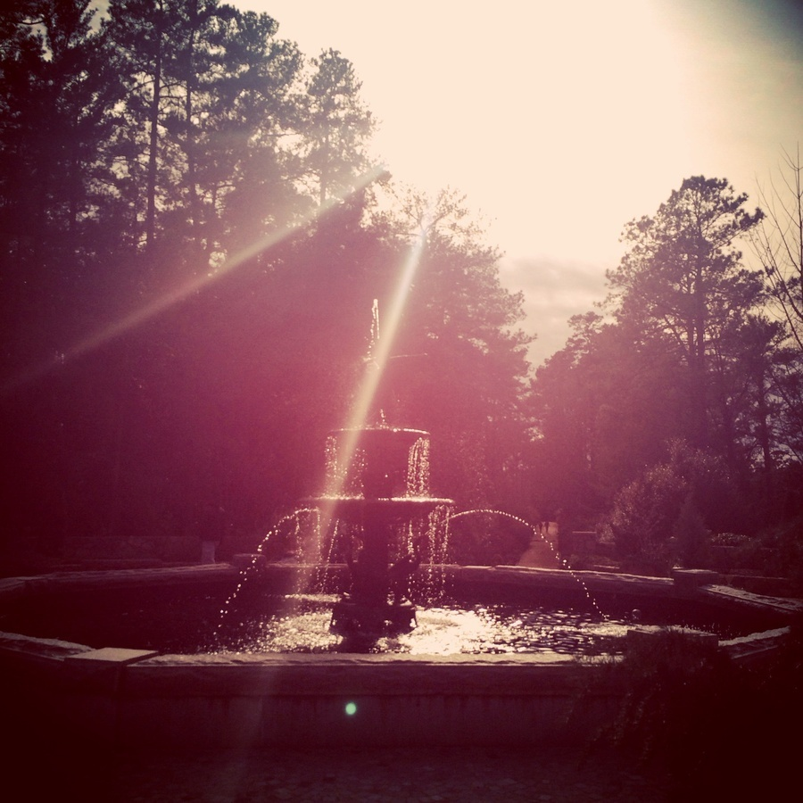 Stephanie Shaner's photo of Explore the Sarah P. Duke Gardens