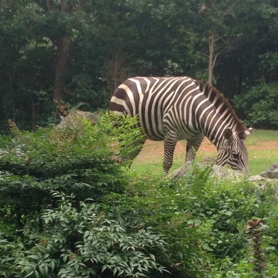 Tanya Groat's photo of Visit the NC Zoo