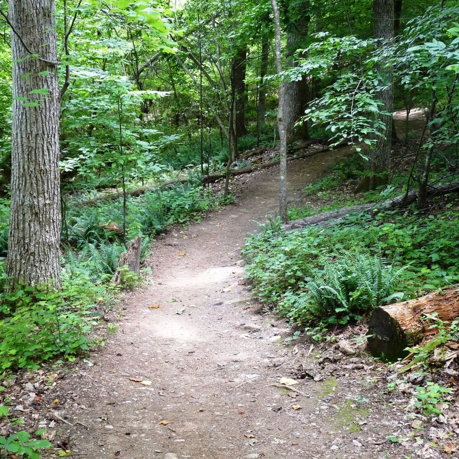 Go For A Run On Company Mill Loop Trail at Reedy Creek Entrance