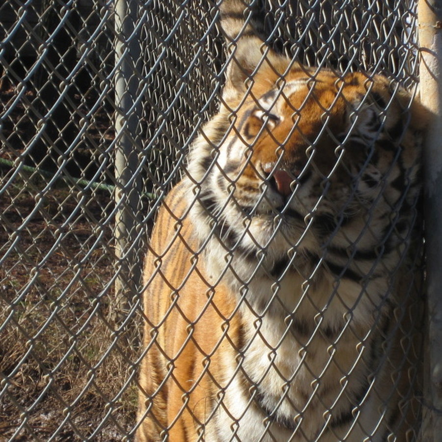 David Brower's photo of Tour Carolina Tiger Rescue
