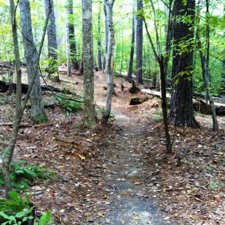 Go For A Run On Loblolly Trail at Reedy Creek Entrance