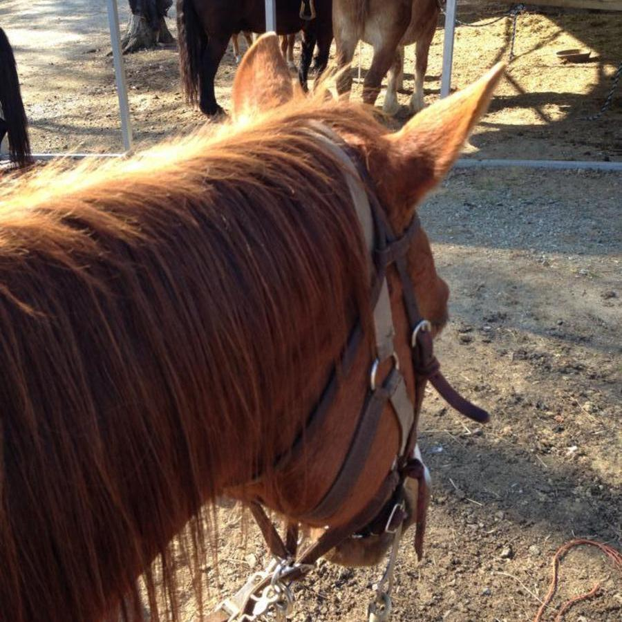 Heather Ford's photo of Go Horseback Riding at Dead Broke Farm