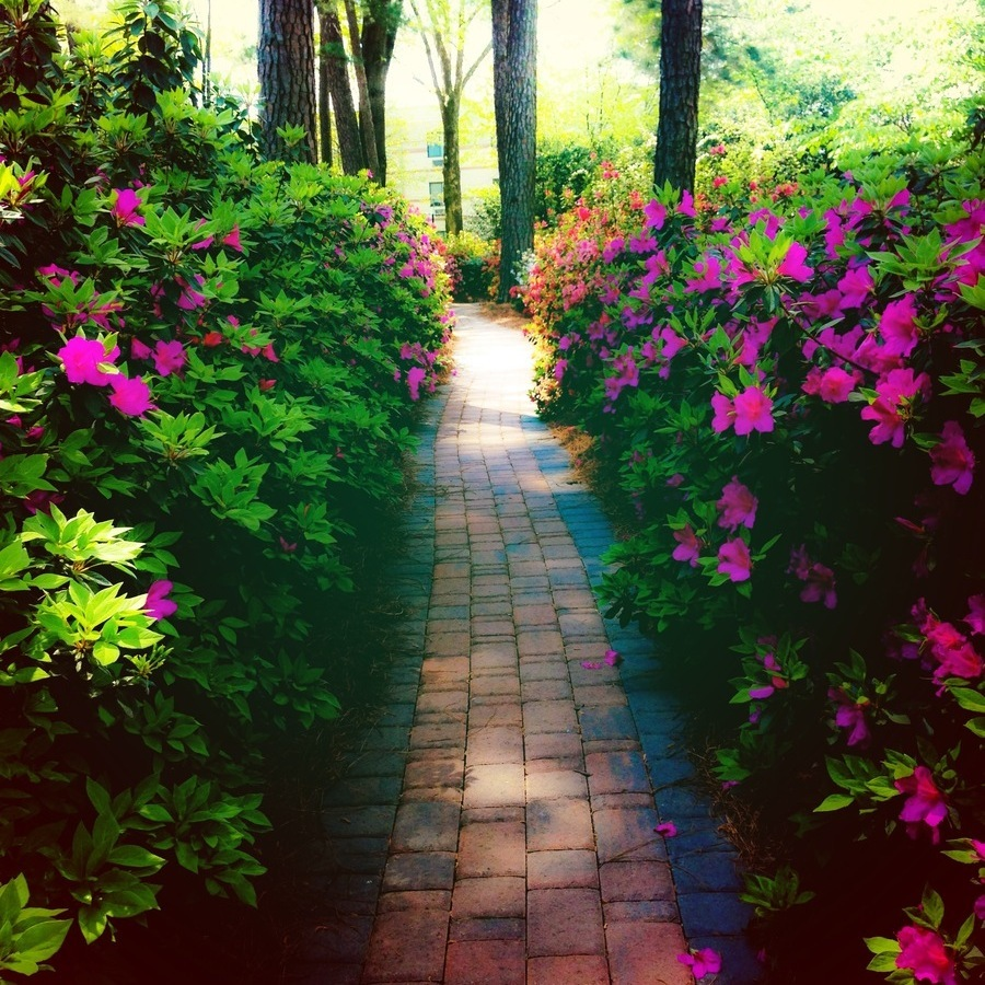 Sierra Clarke's photo of Explore Raleigh's Hidden Azalea Gardens