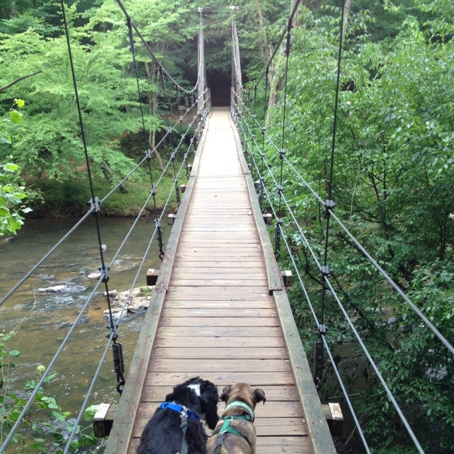 Rebecca Riley's photo of Local Escape: Bask in the Glory of the Eno