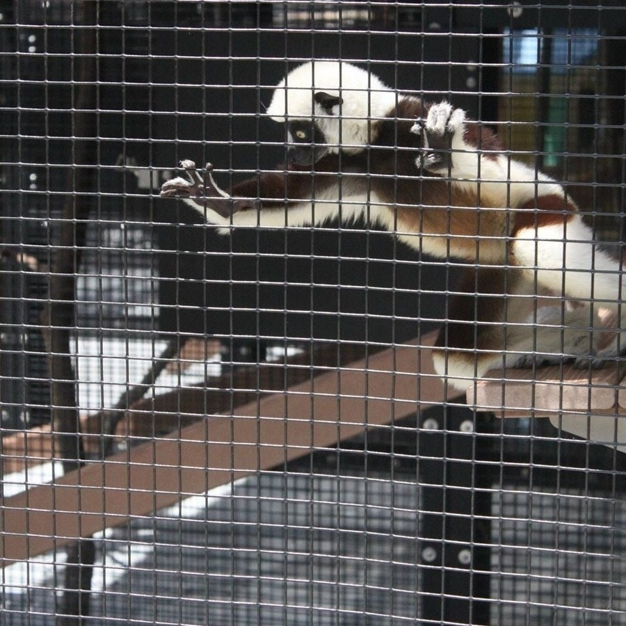 Renée Baker's photo of Tour Duke Lemur Center & Ponder Animal Antiquities