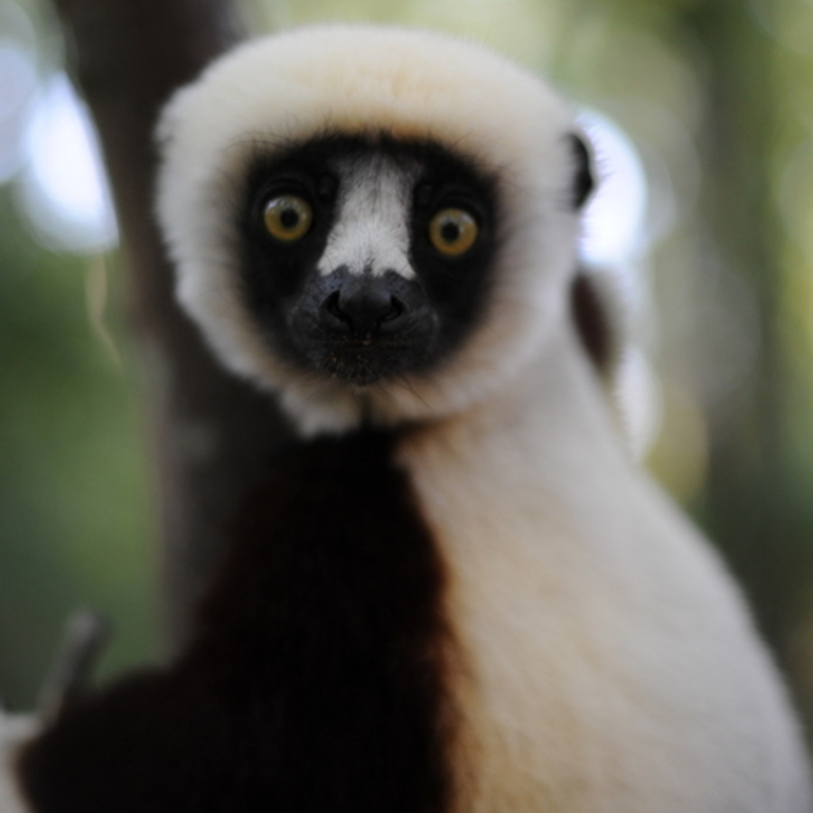 Melissa Chieffe's photo of Tour Duke Lemur Center & Ponder Animal Antiquities
