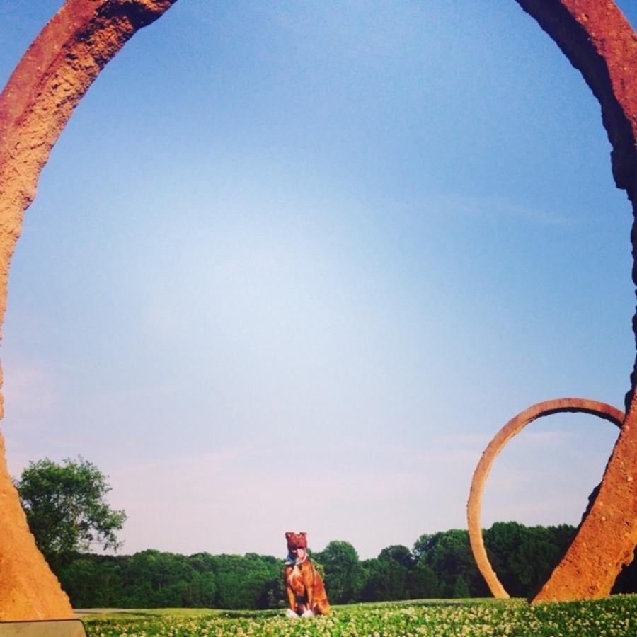 Cass Lutz's photo of Visit the NC Museum of Art Park
