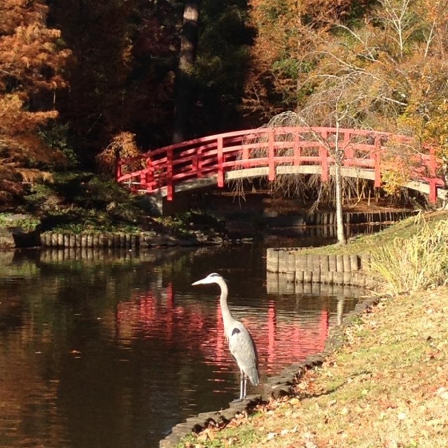 Shaina Garrison's photo of Explore the Sarah P. Duke Gardens