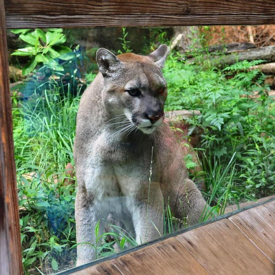 Visit the NC Zoo NC Zoo