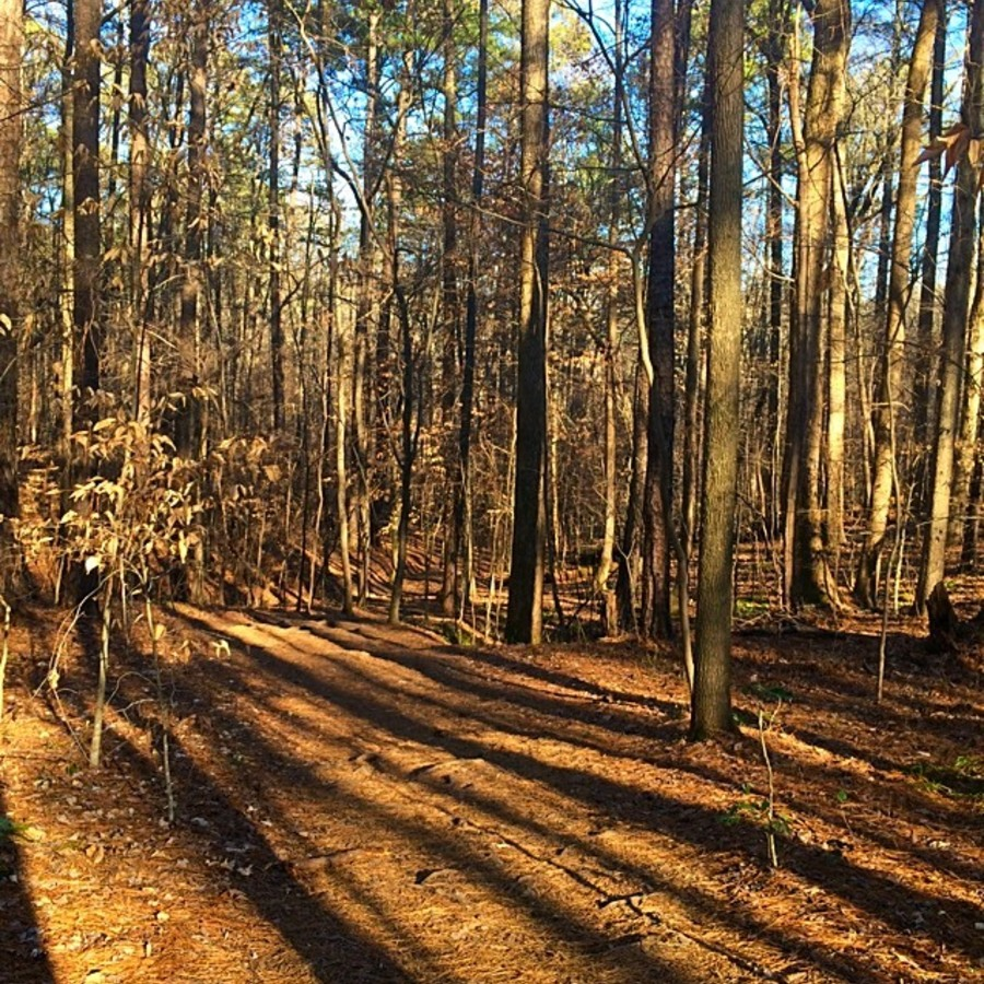 Kevin Koryto's photo of Go For A Run On Loblolly Trail