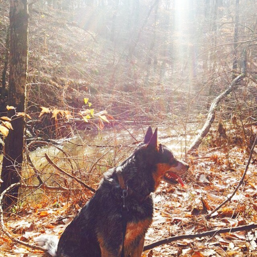 Ali Shinn's photo of Go For A Run On The Sycamore Trail