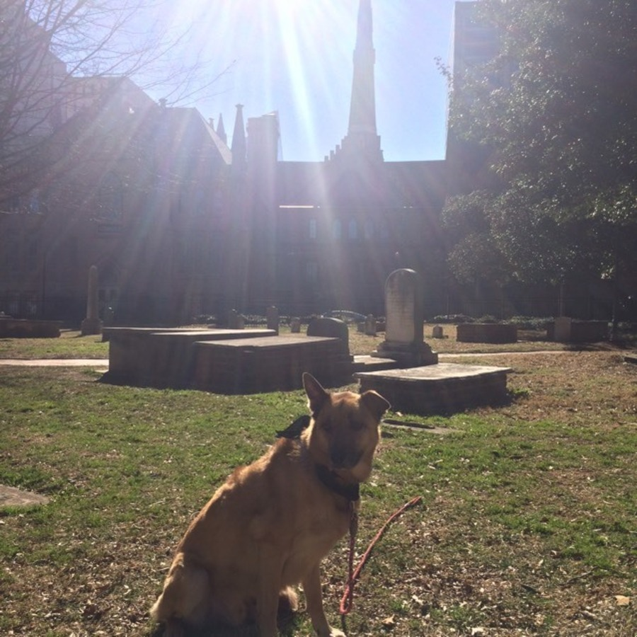 Heather Peer's photo of Explore Old Settlers' Cemetery