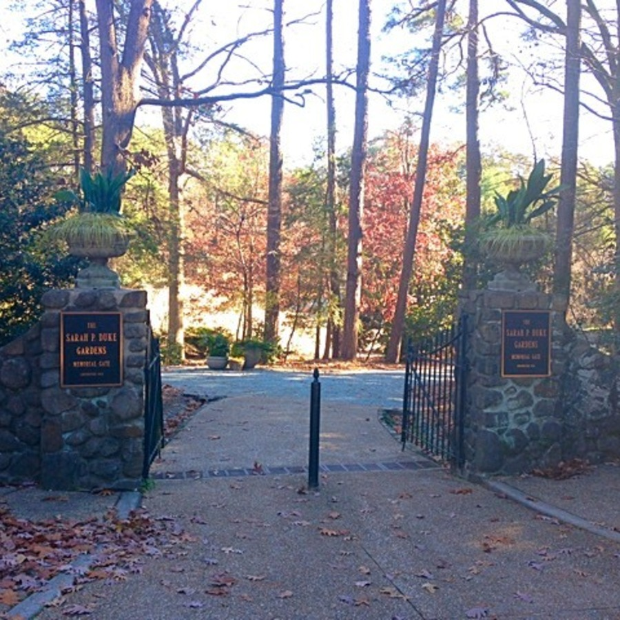 Eileen Rose's photo of Explore the Sarah P. Duke Gardens